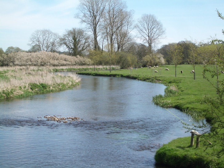 River Frome Dorset