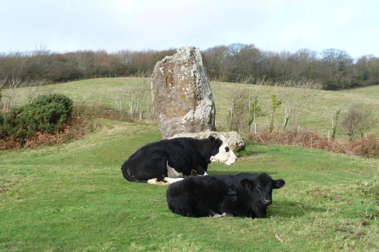 Cows IoW 5