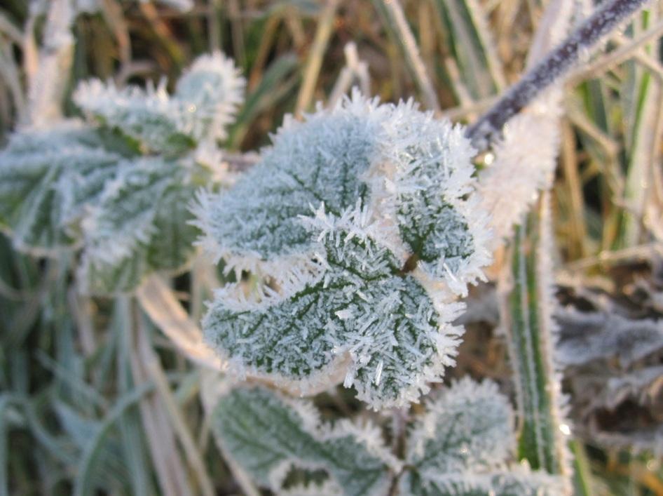 Frost Crystals Dorset 2