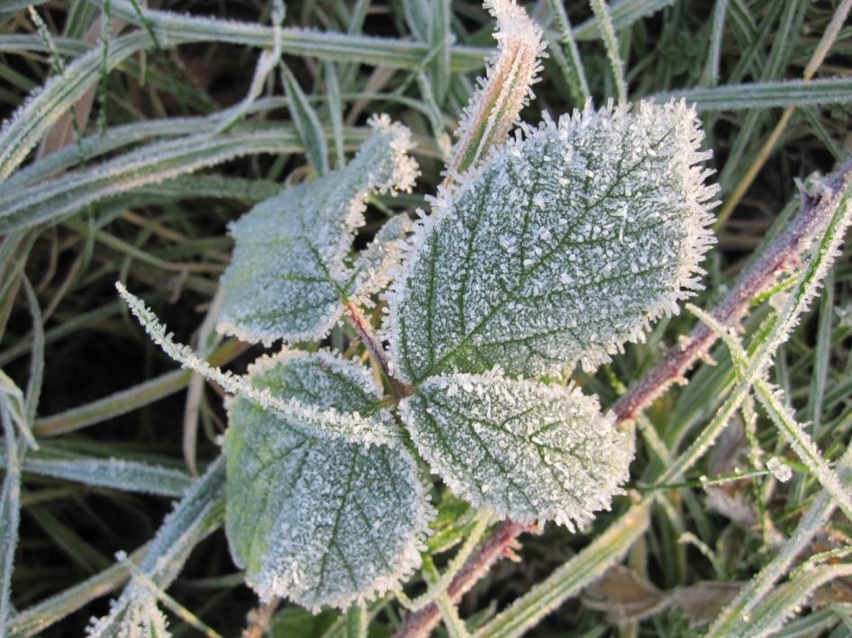 Frost Crystals Dorset 3