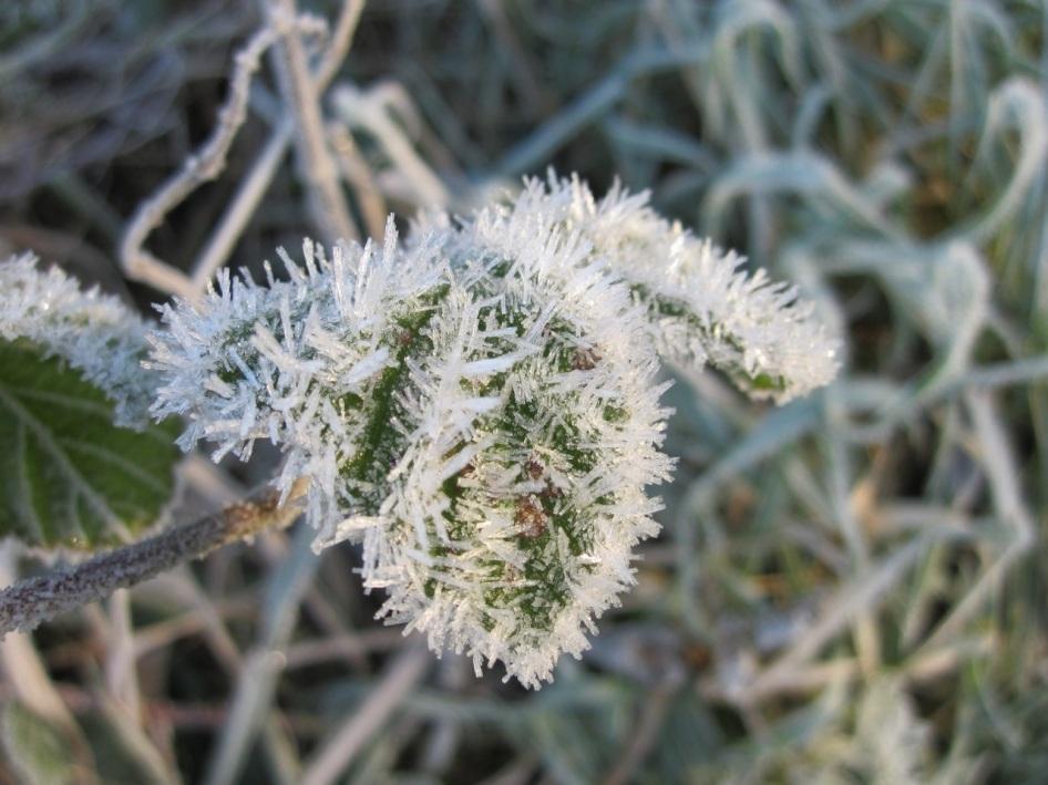 Frost Crystals Dorset 4