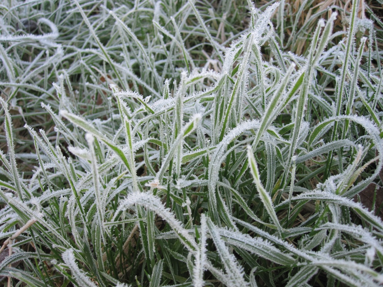 Frost On Plants Rolling Harbour Gallery