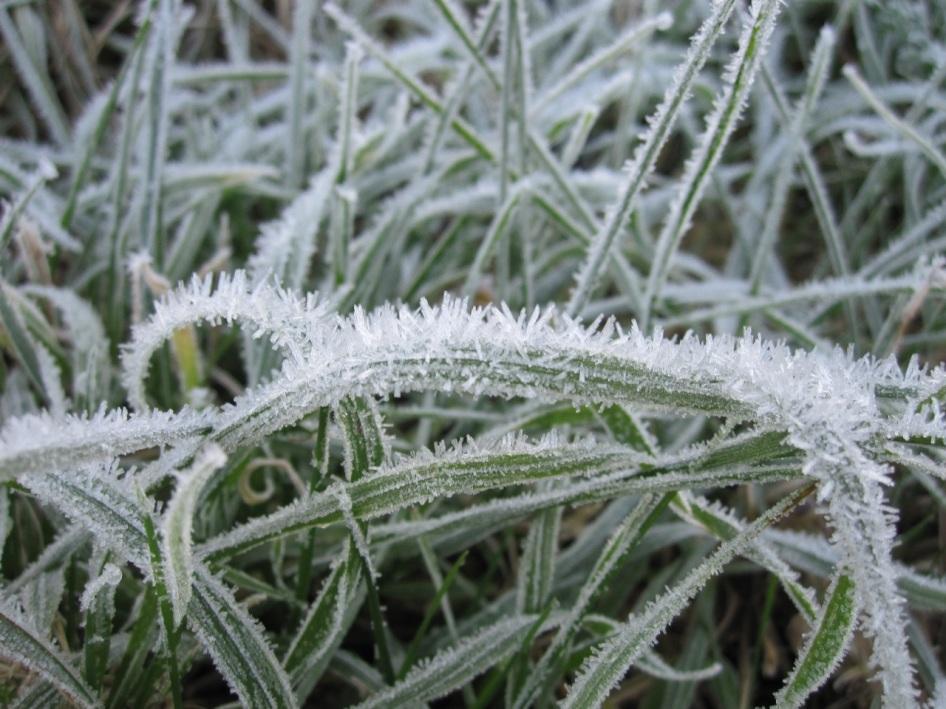 Frost Crystals Dorset 6