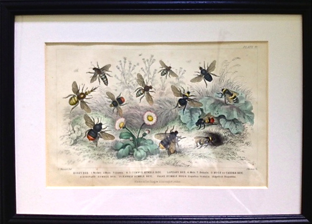 Bee engraving 1852