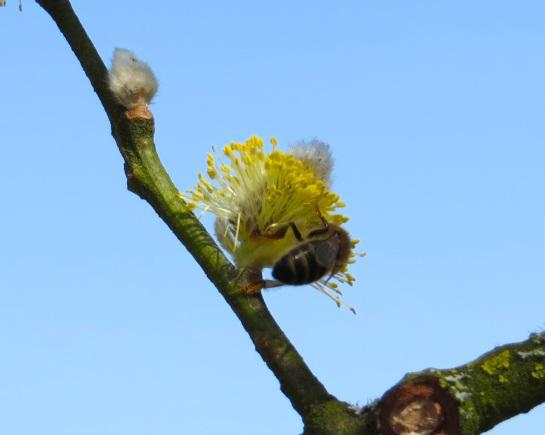 Dorset Spring 1
