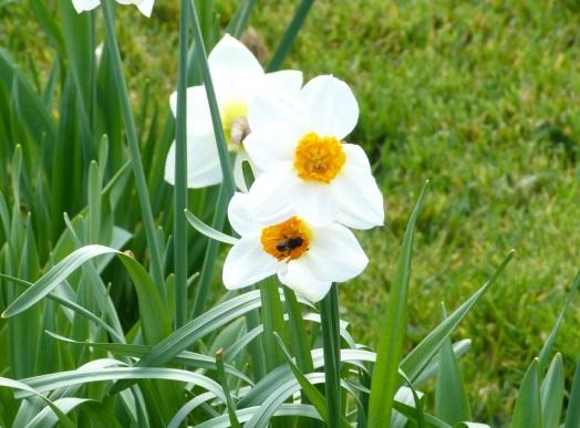 Dorset Spring 10
