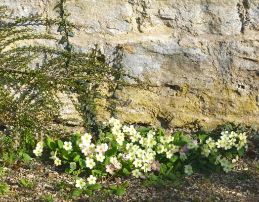 Dorset Spring 16