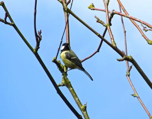 Dorset Spring 3