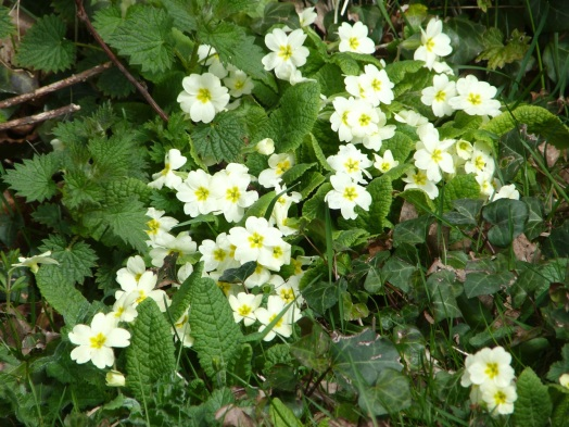 Dorset Spring 7