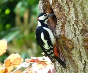 Woodpecker 5.13-1