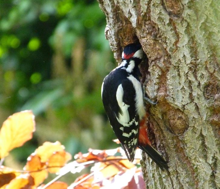 Woodpecker 5.13-2