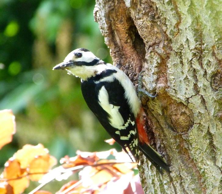 Woodpecker 5.13-3