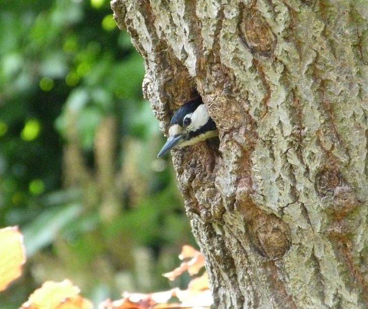 Woodpecker 5.13-4