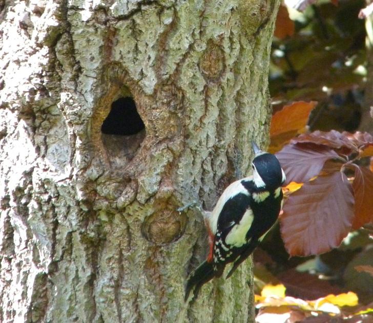 Woodpecker 5.13-5