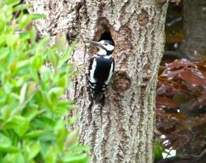 Woodpecker 5.13-6