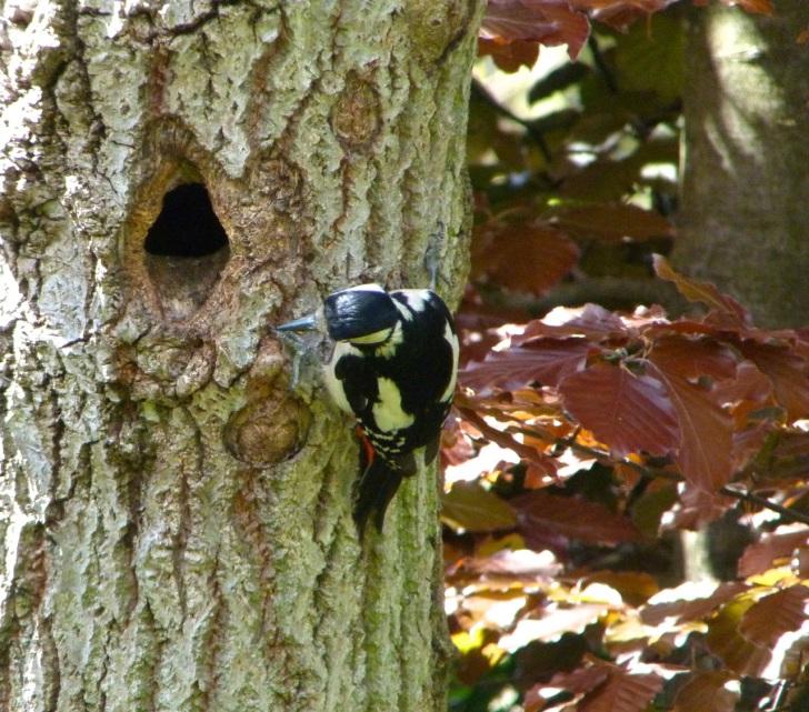 Woodpecker 5.13-7