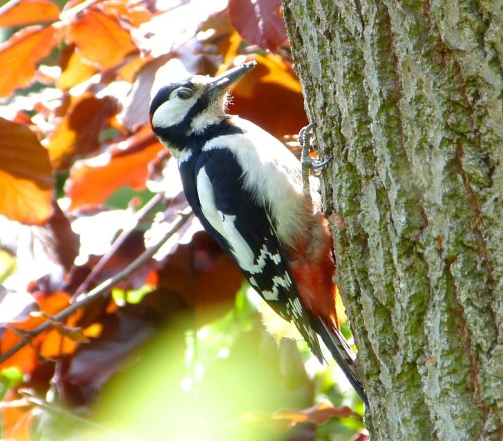 Woodpecker 5.13-9