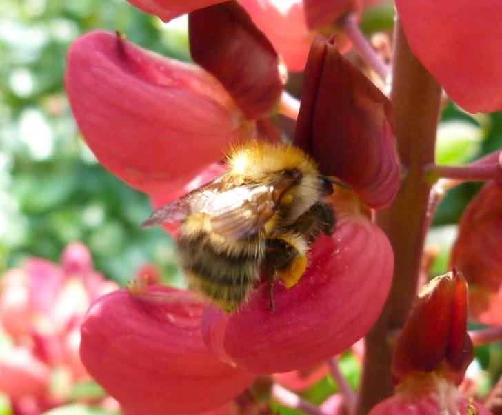 Bees June 1