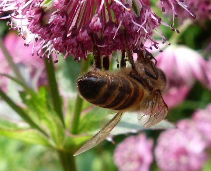 Bees June 10