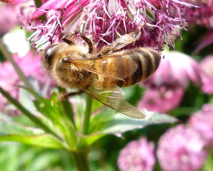 Bees June 11