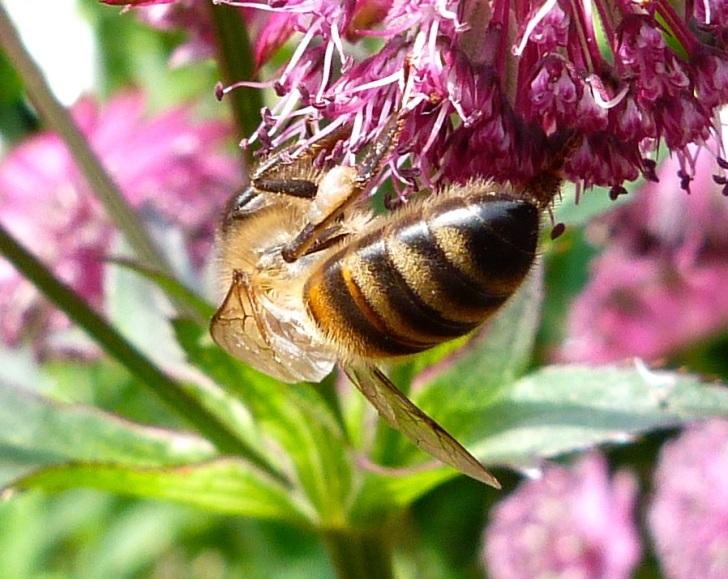 Bees June 12