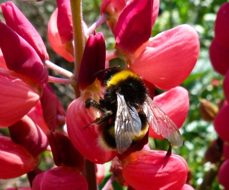 Bees June 2