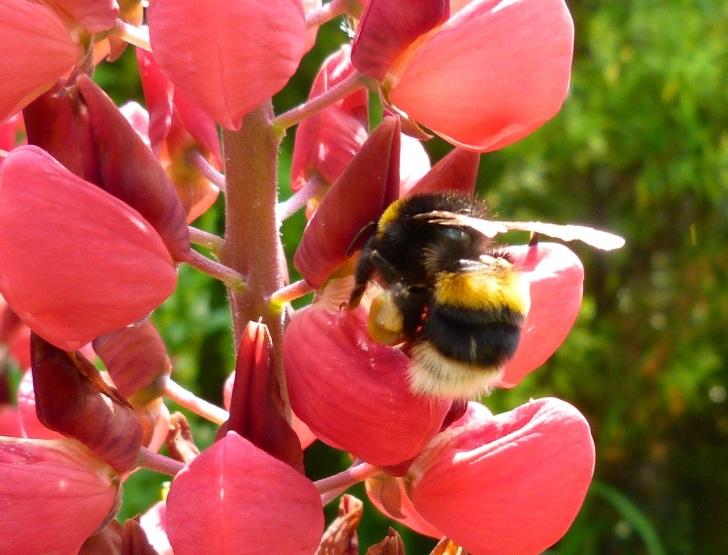 Bees June 5