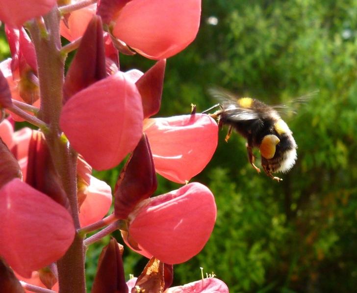 Bees June 6