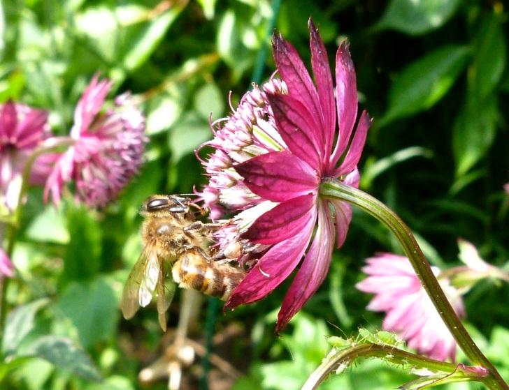 Bees June 7