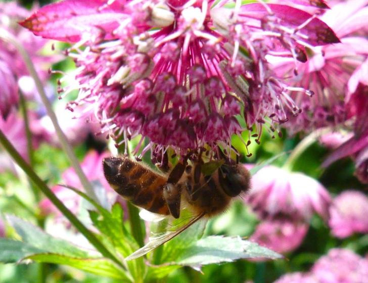 Bees June 9