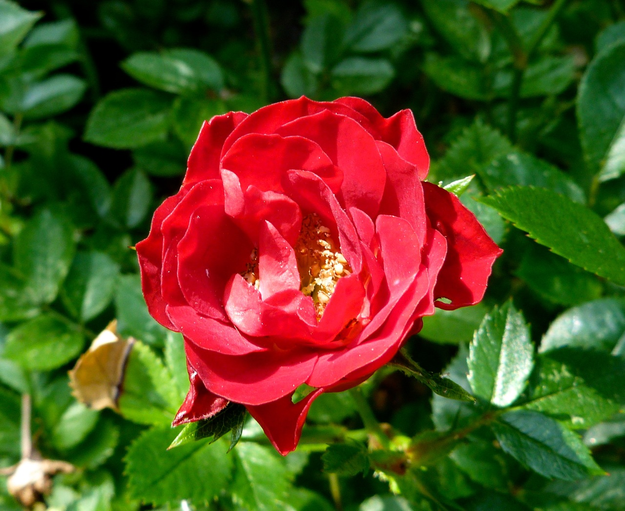 Roses In Garden: GARDEN FLOWERS IN 10 MINUTES OF SUNSHINE (LONDON