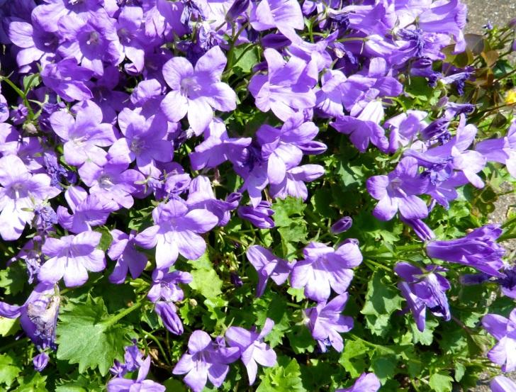 Garden Flowers in June 17