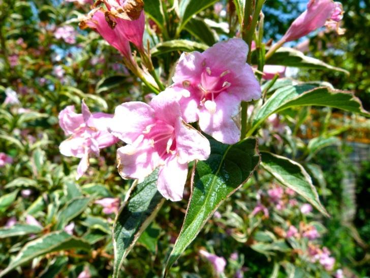 Garden Flowers in June 3