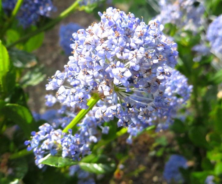 Summer garden flowers (Dorset) 19