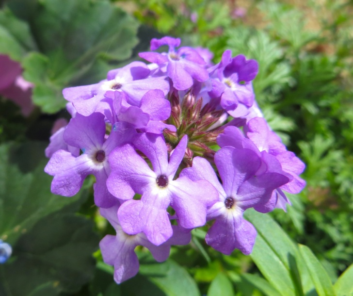 Summer garden flowers (Dorset) 2