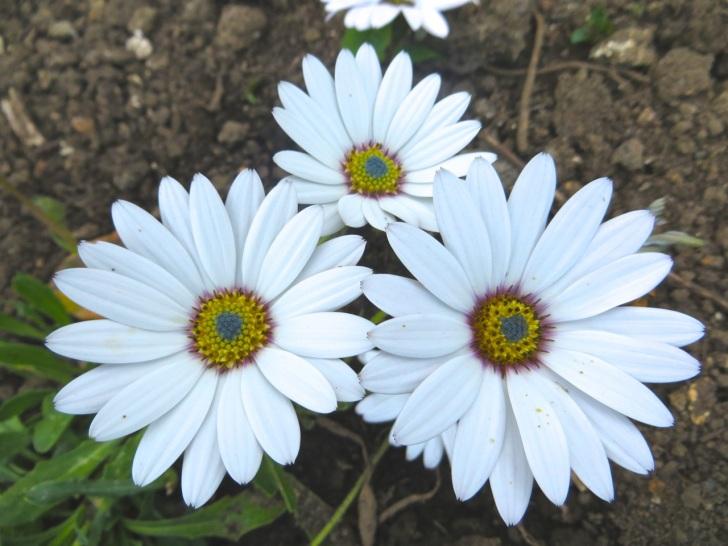 Summer garden flowers (Dorset) 21