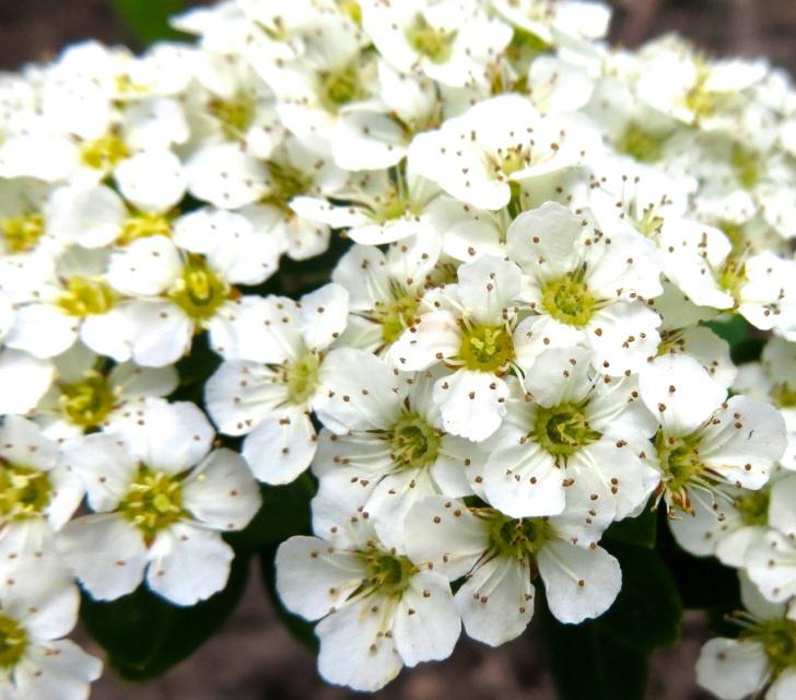Summer garden flowers (Dorset) 22