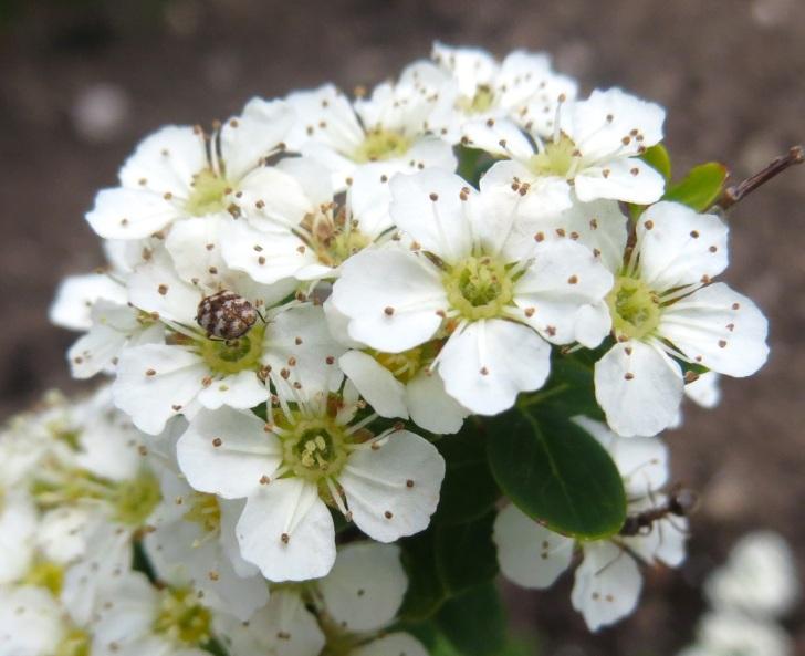 Summer garden flowers (Dorset) 23