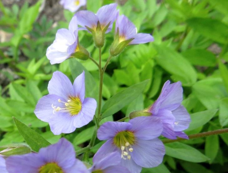 Summer garden flowers (Dorset) 25