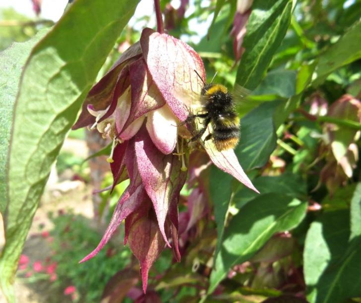 Summer garden flowers (Dorset) 3