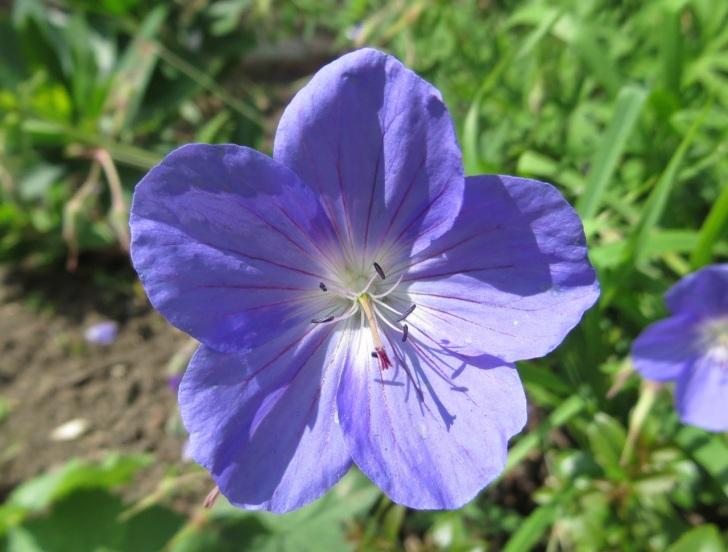 Summer garden flowers (Dorset) 4