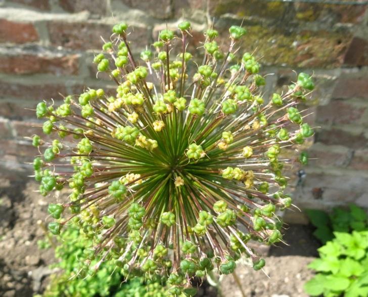 Summer garden flowers (Dorset) 8