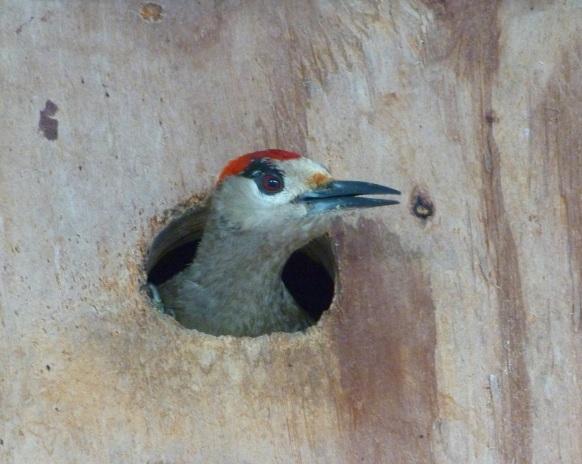 WIW Nesting Box 3