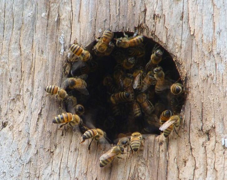 WIW Nesting Box 6