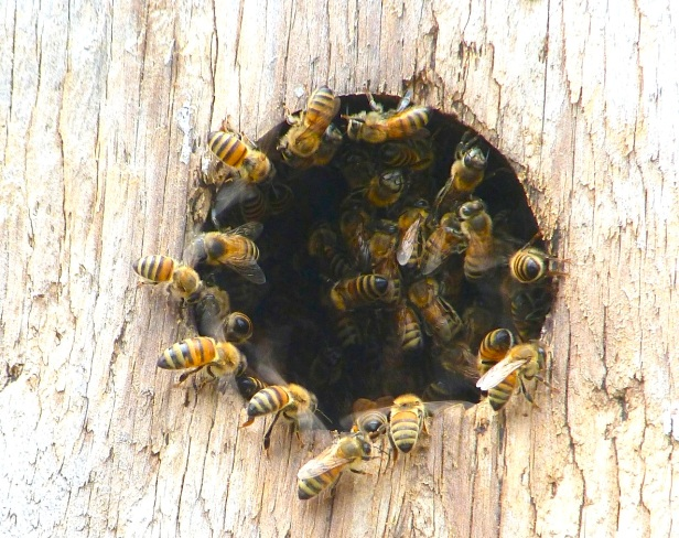 Delphi Wild Bees 1