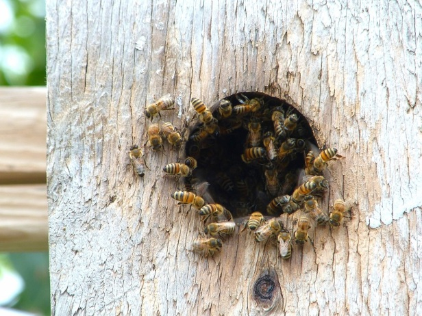 Delphi Wild Bees 2
