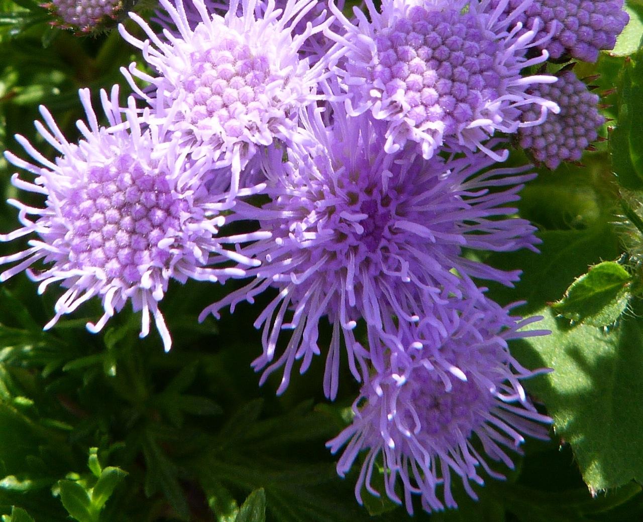 SECOND BUNCH OF FLOWERS FROM DORSET | ROLLING HARBOUR GALLERY: https://rollingharbourlife.wordpress.com/2013/07/19/a-second-bunch...
