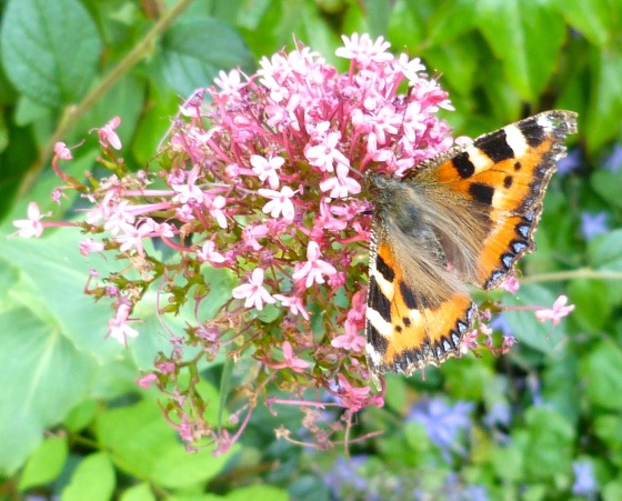 Dorset Flower Bunch 2-8