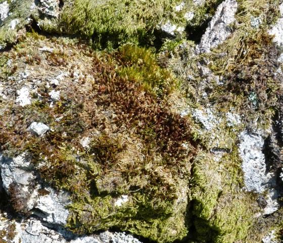 Dartmoor Rock Wall 1