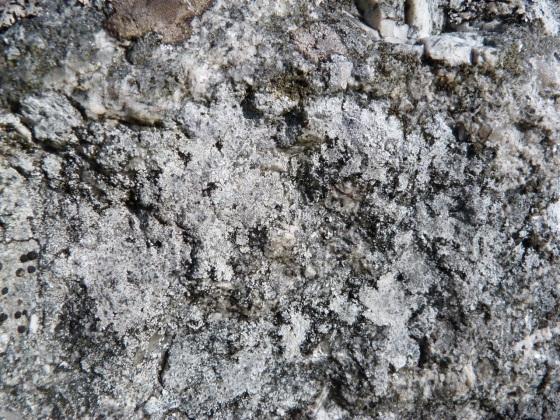 Dartmoor Rock Wall 10